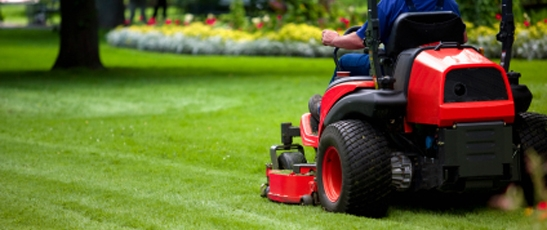 Professional Lawn Care Services